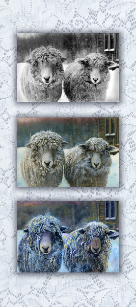 Two Sheep Transition 10x20 copy
