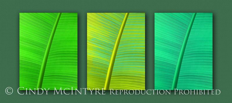 Banana Leaf in Green 10x20 copy