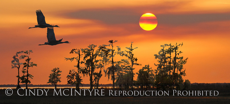 Kissimmee Sunset 10x20 copy