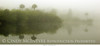Everglades Fog 10x20 copy