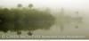 Everglades Fog 10x20 copy