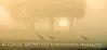 Sandhill Trio Sunset 10x20 copy