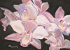 "<h2>"" Orchid Chaos ""</h2> Original Pastel on Sanded Paper  11.5"" h x 16"" w   $350."