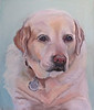 "<h2> Win's Beautiful Lab </h2> Original Pastel on Sanded Paper 14""h x 12"" w"