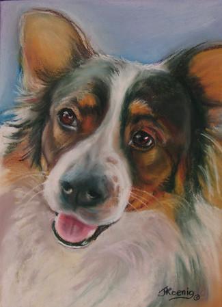 """""""Sammy""""     Original Pastel on Sanded paper<br /> 9"""" w x 11"""" h   Commission,  SOLD"""