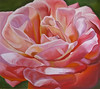 "<h2> Peach Close-Up </h2> Pastel on Paper 18"" w x 16.25"" H $900."