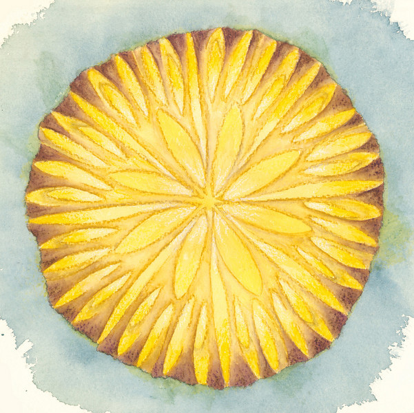 Organic Peace<br /> Watercolor<br /> 2009<br /> <br /> This holds an ambiguous natural form for you to interpret.  Is it a chrysanthemum, a shell, a seedpod, a cone?  Whatever you see, it may perhaps be your totem for peace, calling you.