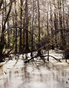Lover's Lane Swamp, Augusta, Ga