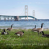 Mackinaw , Mackinac Bridge