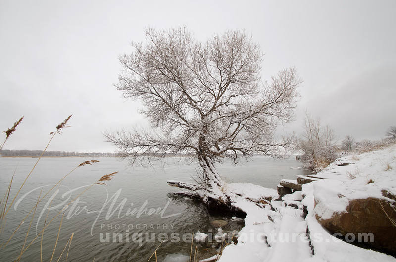 tree spring winter, pure michigan, st. clair river, ice