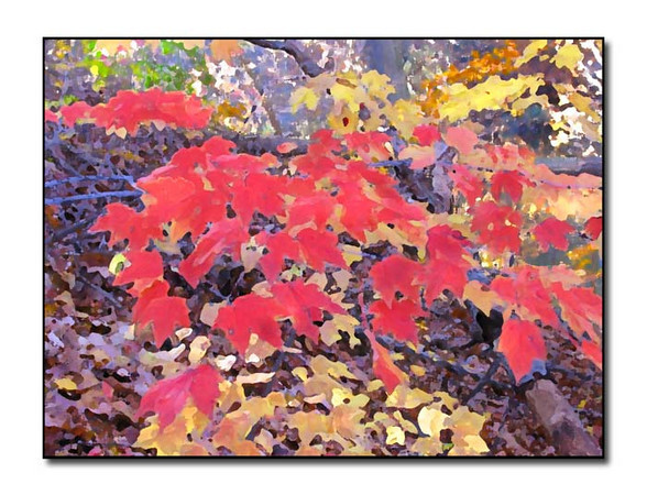 Woodland Color (72051116)