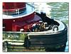 NY Harbor Tug (40694744)