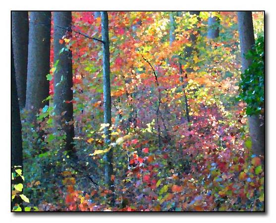 Fall Forest Scene (40850302)