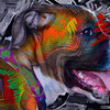 Boxer Granger (Color)-Photo by Dan Smigrod and Artist David Schendowich (PhotoArt361 blogspot com)