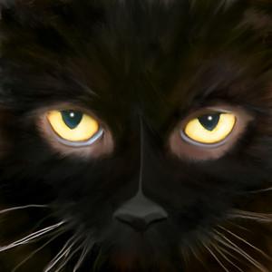 Black Cat!!