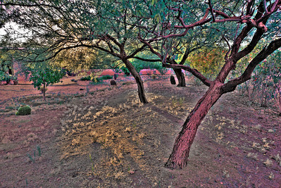 A painterly photo of my front yard just before sunset.