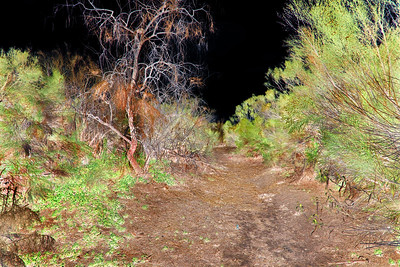 A painterly photo of Tucson's Rillito Wash makes it look like nighttime.
