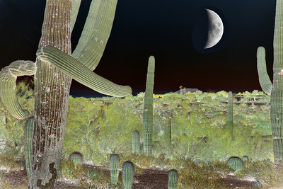 A reversal of light and shadow -- and the moon -- turns this Arizona desert scene into a mystical one.