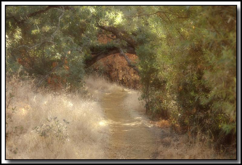 Wooded Path, Rocklin, Ca.