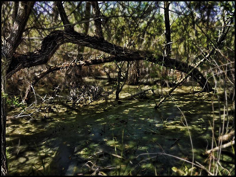 Swampland at the San Elijo Lagoon