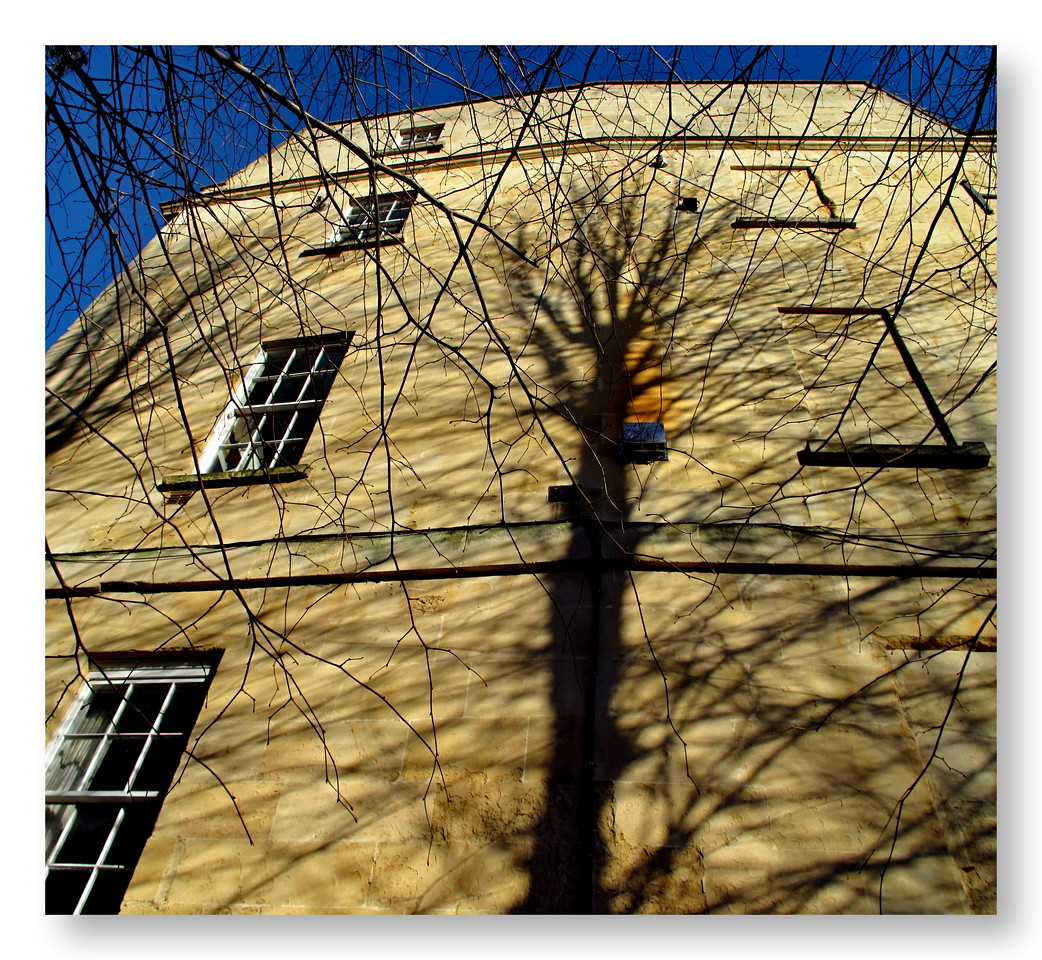 Tree Shadow - Alfred Street Bath