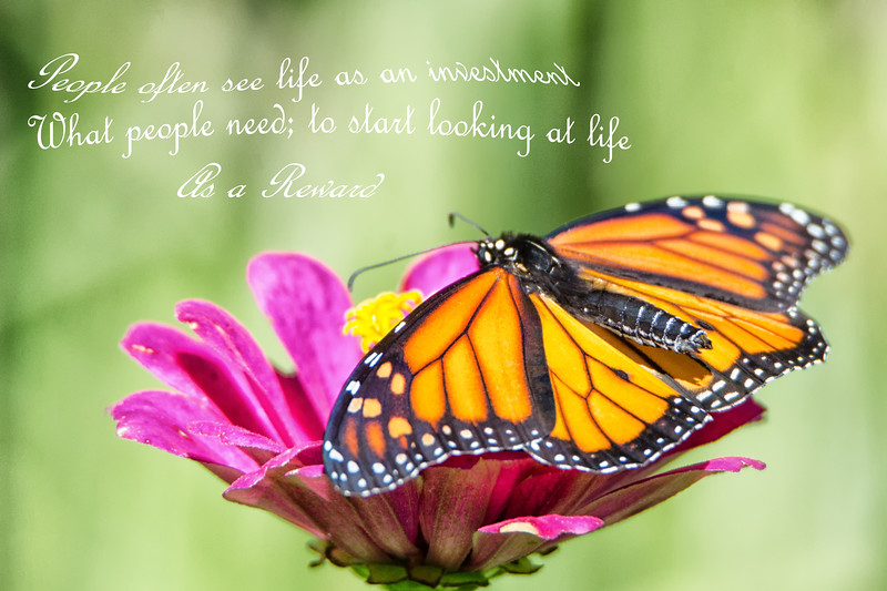 Life's Reward - Life Quote