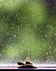 6/22/11: Rainy Day III