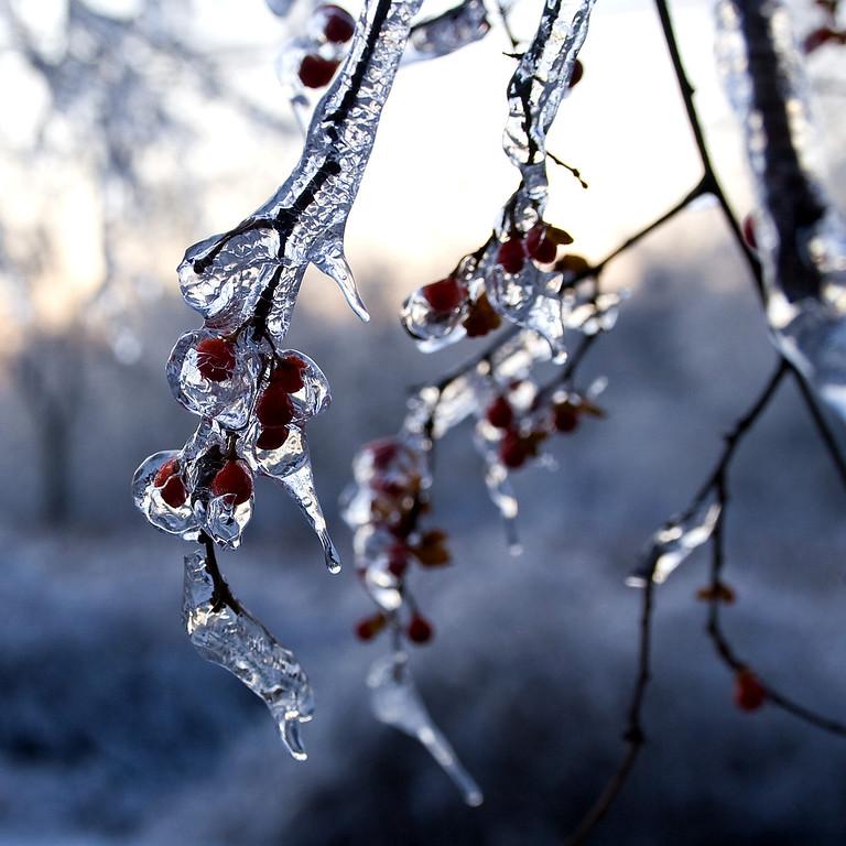 2008 Ice Storm