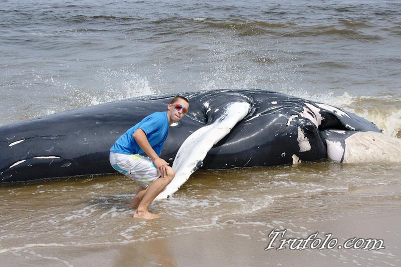 Dead Whale in Monmouth Beach
