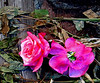 Life and Death in the Garden<br /> It's a funny thing-- many artists try to make their paintings look like photographs, but I try to make my photographs look like paintings.