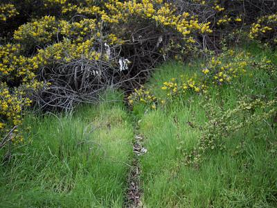 Trail. San Diego, CA.