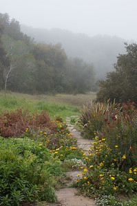 Garden. Carmel Valley, CA.