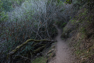 Waterfall Trail. Carmel Valley, CA.
