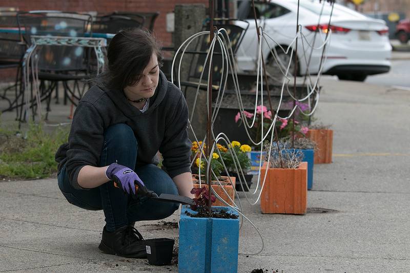 The trees at Riverfront Park in Fitchburg are in full bloom and are making the park look like spring has arrived but the temperature says different. Strong Style Coffee Manager Casey Taylor, 28, of Fitchburg plants some flowers on their outdoor patio Wednesday, May 15, 2019. SENTINEL & ENTERPRISE/JOHN LOVE
