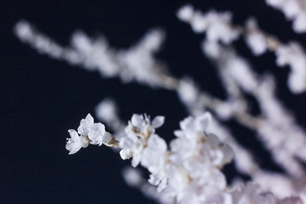 Peach Blossoms in IR
