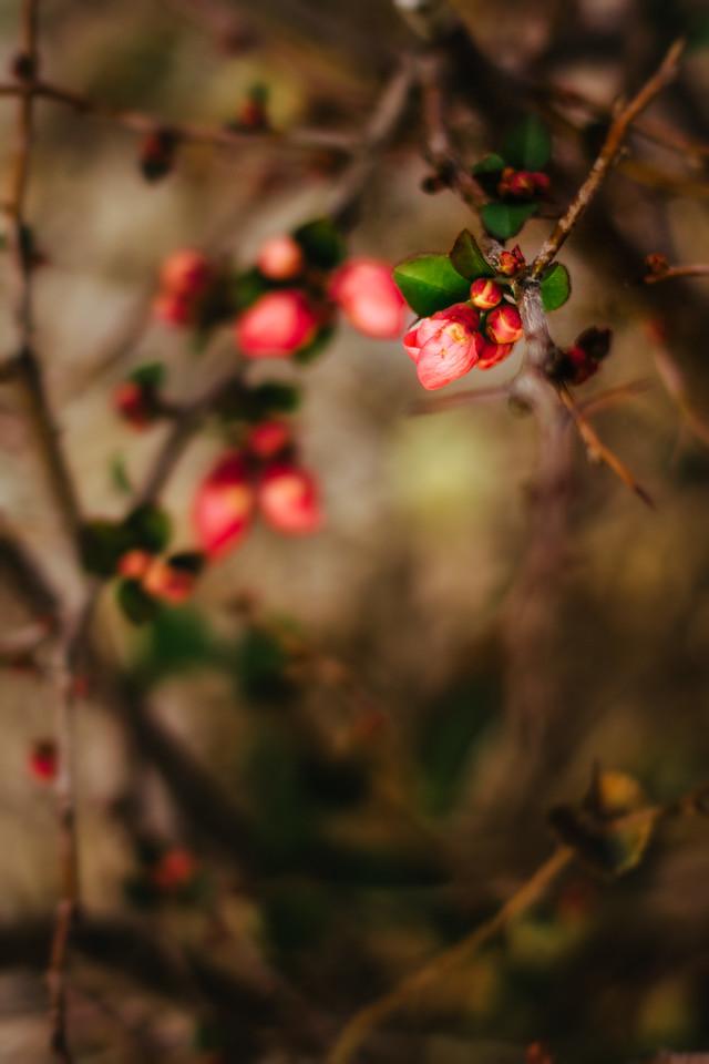 Spring in December