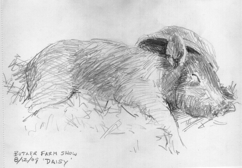 "Butler Farm Show - Daisy the Pig<br /> <br /> Now how could I possibly walk by and not sketch this cute pig ?  <br /> <br /> ""Daisy"" was fast asleep with her food bowl leaning against her head like a hat.  She looked so content. <br /> <br /> This was a five minute sketch, done in a very 'fragrant' part of the farm show.  It all adds to the experience of sketching ""Plein Air"".  Or ""Not So Plein Air"".<br /> <br /> Medium:  Pencil on Paper"