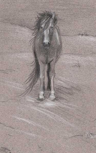 Assateague Island - Lone Pony<br /> <br /> This sketch is done at Assateague Island near Chincoteague & Ocean City.   It actually lies in the states of Virginia and Maryland.<br /> <br /> Camping on the beach there offers opportunity to come in close proximity to the wild ponies and deer that roam the island.  They were all very calm and easy to stand and sketch.<br /> Though of course, you shouldn't attempt to pet, or get too close.<br /> <br /> If you're looking to vacation along the shore on the eastern U.S.A. you should consider stopping by.<br /> Beware, though, they humourously say their state bird there is the mosquito.<br /> <br /> Medium:  Pencil on charcoal paper.