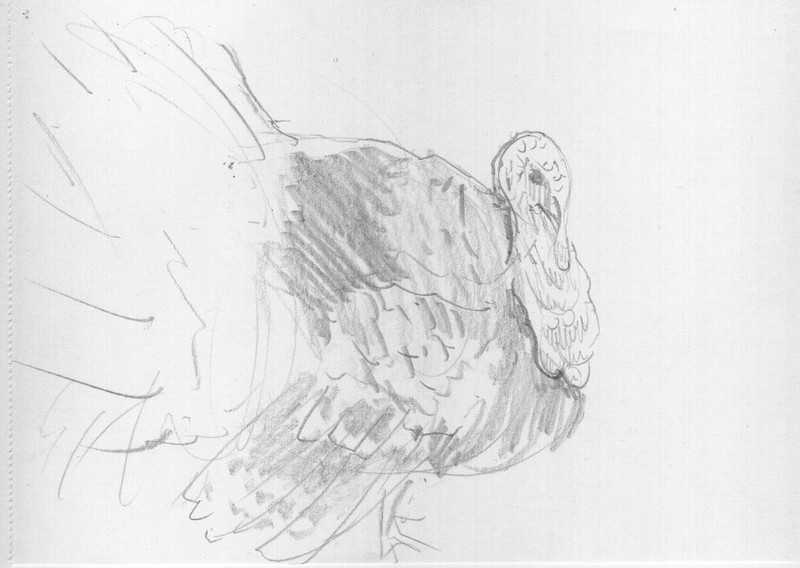 Butler Farm Show - Turkey<br /> <br /> This is another 'quick sketch' done of a very handsome and talkative turkey. Let me rephrase that to a 'very, very talkative turkey.'  A very 'loud, talkative, turkey'.<br /> <br /> It's fun to get into the pattern of, 'walk' 'stop' 'draw',  repeat....   especially if your hand work is a bit rusty.  It really helps to just let yourself 'loosen up' when done with the right attitude.  Just capture something of your subject, no pressure to make it photorealistic, move on to another subject.   You start making more judicious markings on the paper with the time you do have. <br /> <br /> Even when the drawing is really rough, you can still capture 'an attitude',  or the basic essence of the animal.<br /> <br /> Medium: Pencil on Paper