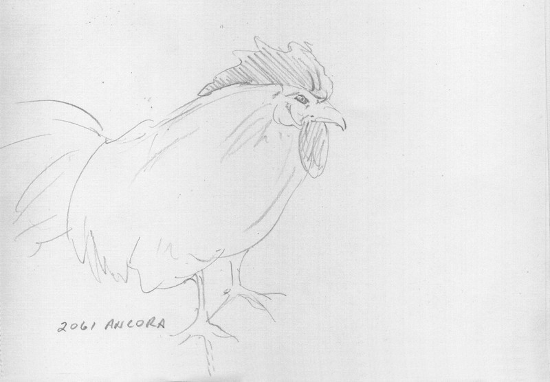 Butler Farm Show - Rooster<br /> <br /> This quick sketch of the 'Ancora' breed was done in about a minute.  There were people walking through the aisles in this show area, so it's best to do a really quick sketch and keep on moving. <br /> <br /> Again, this makes for great practice putting down only the bare minimum and still capture your subject.<br /> <br /> Medium: Pencil on Paper