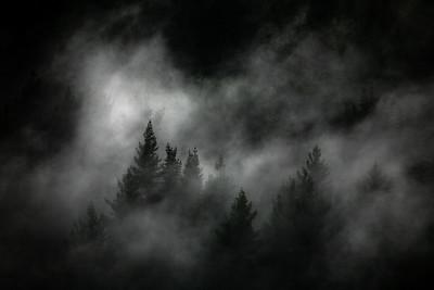 Pines, New Zealand