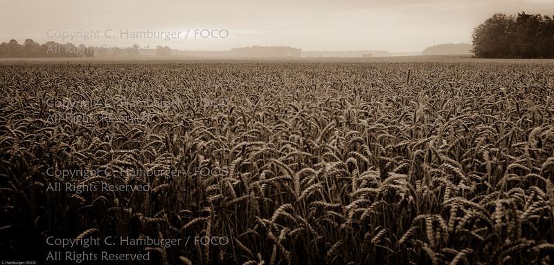 Eastern Shore Grassfields