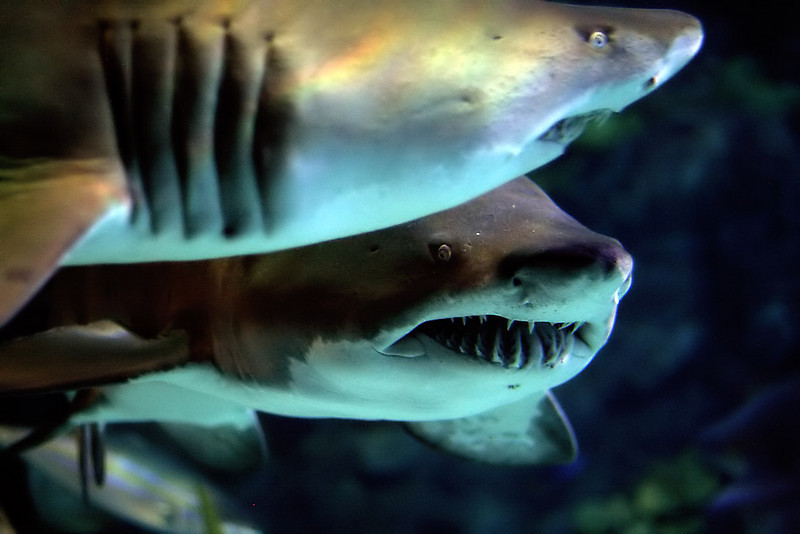 """To see more of underwater life, go to:<br />  <a href=""""http://www.salehphotography.com/Animals/The-Beauty-of-Underwater-Life"""">http://www.salehphotography.com/Animals/The-Beauty-of-Underwater-Life</a>"""