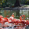 """To see more birds, visit:<br />  <a href=""""http://www.salehphotography.com/Animals/Birds"""">http://www.salehphotography.com/Animals/Birds</a>"""