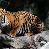 "To see more Predators; go to:<br />  <a href=""http://www.salehphotography.com/Animals/Predators"">http://www.salehphotography.com/Animals/Predators</a>"