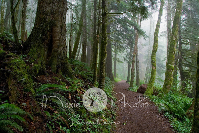 Saddle Mountain Trail - Columbia River Gorge, Oregon