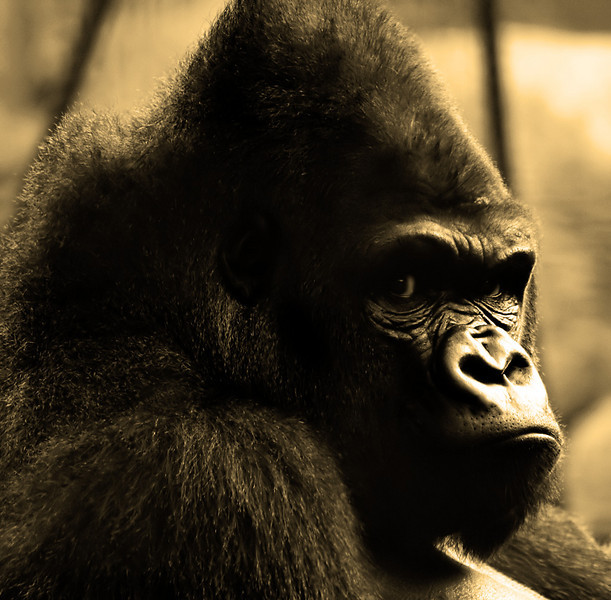 """This picture is from the """"Animals in Captivity"""" album:<br />  <a href=""""http://www.salehphotography.com/Animals/Animals-in-Captivity"""">http://www.salehphotography.com/Animals/Animals-in-Captivity</a>"""