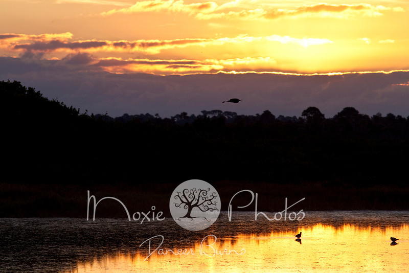 Sunrise with Silhouetted Egret in Flight - Merritt Island Wildlife Refuge - Titusville, Florida