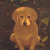 Scarlet<br /> <br /> This portrait was done for a client who recently had a furry addition to her family.  The acrylic painting was done from reference photos supplied by her.  I did take a few liberties with the background to make for a better setting, but otherwise stayed with the lighting and color scheme from the original photo.<br /> <br /> Medium:  Acrylic on Canvas
