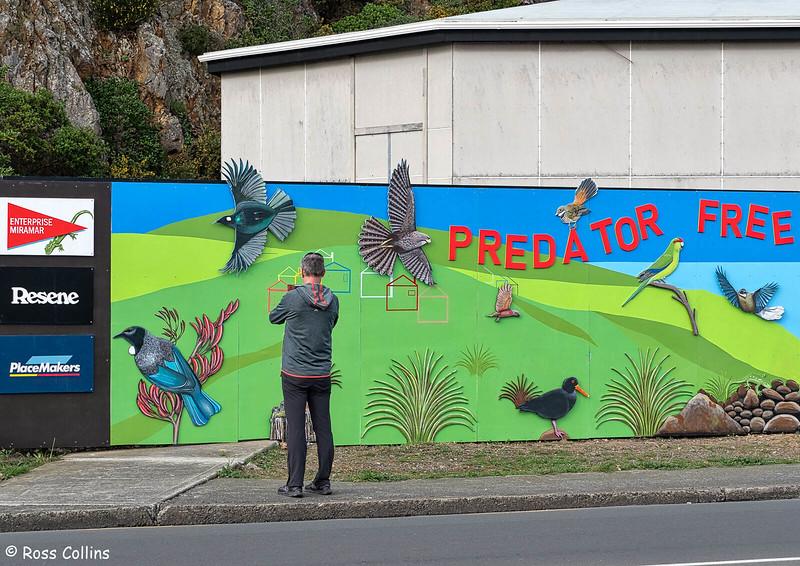 Predator-Free Mural, Miramar, 27 June 2020